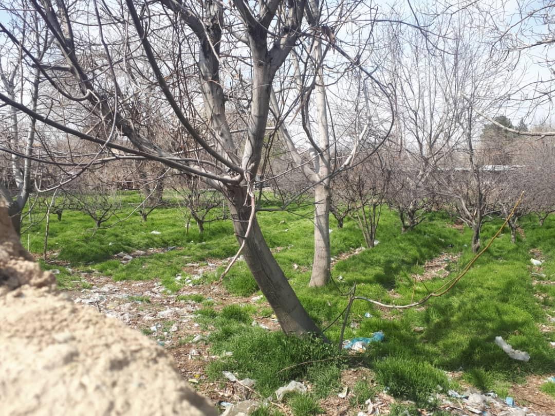 باغ قجری شادآباد